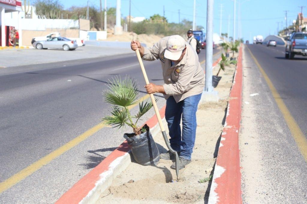 03-Con-la-reforestacion-de-camellones-el-Gobierno-de-Los-Cabos-contribuye-en-el-cuidado-del-medio-ambiente-2-scaled