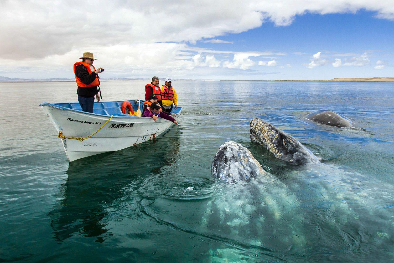 Temporada de avistamiento de la ballena azul, en Loreto.
