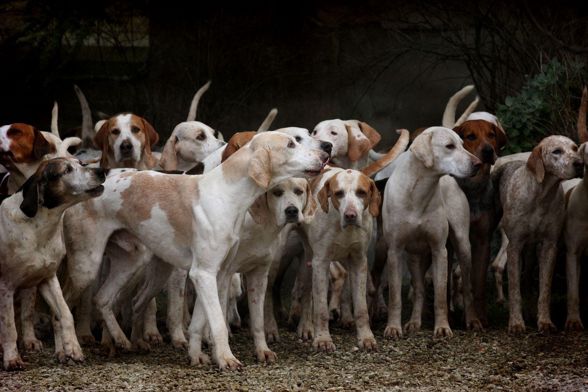 México aprueba mejores condiciones en compra-venta de animales domésticos