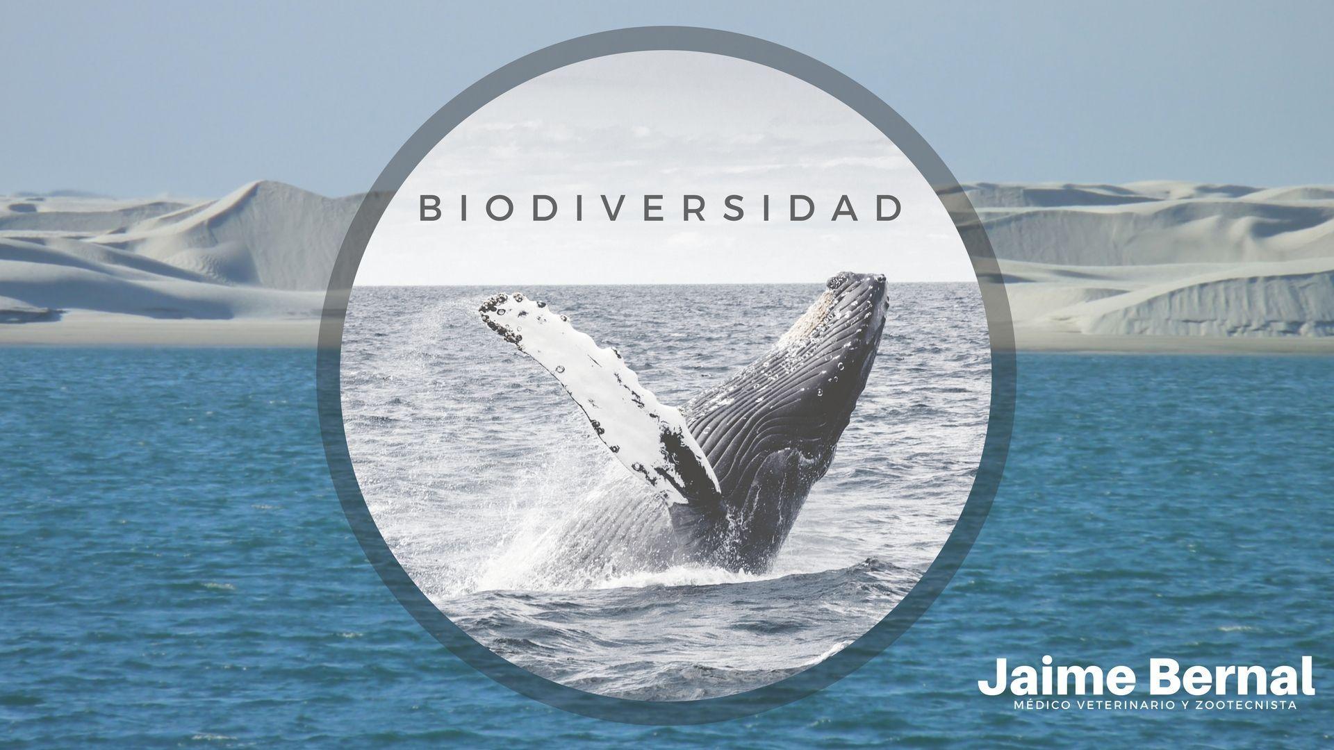 Los mamíferos marinos en nuestras costas Baja Californianas