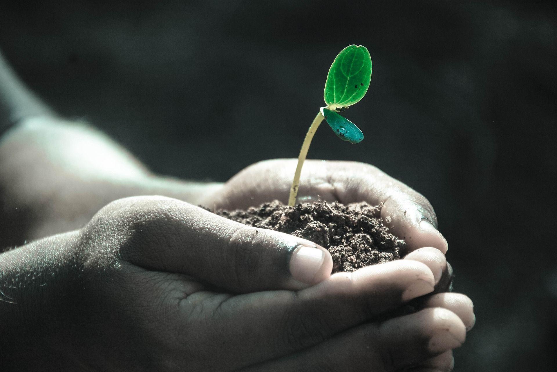 ciudad-de-mexico-plantara-20-millones-de-arboles-y-arbustos-en-seis-anos