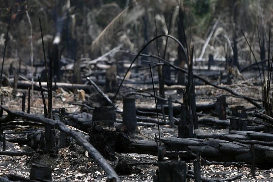 ecologistas-acusan-a-trump-y-bolsonaro-de-iniciar-fuego-en-amazonia