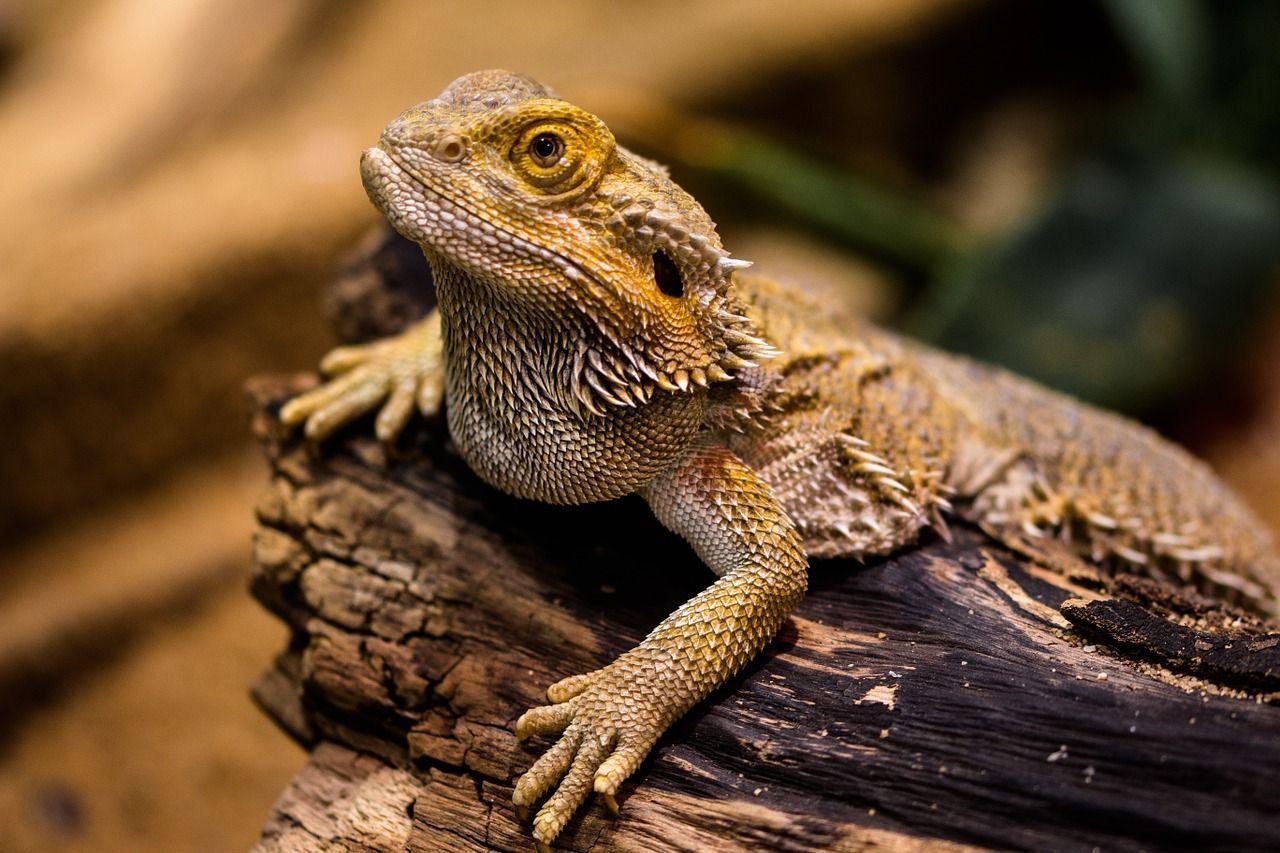 la-recuperacion-de-especies-y-la-extincion-marcan-dia-mundial-de-los-animales