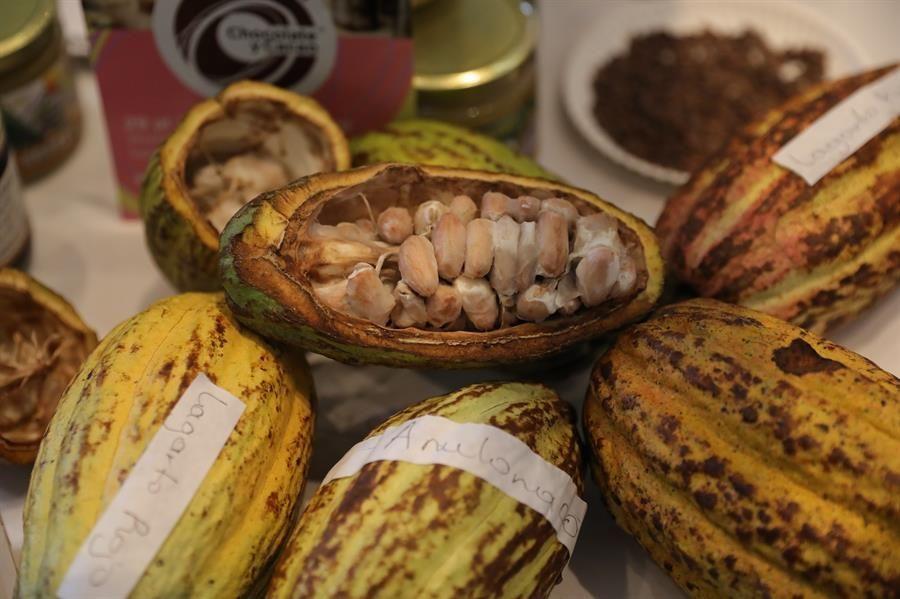 mexico-se-reivindica-como-punto-de-origen-del-chocolate