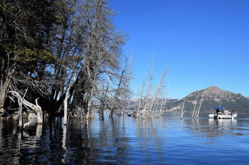 un-bosque-argentino-de-atractivo-turistico-a-potencial-causa-de-un-tsunami