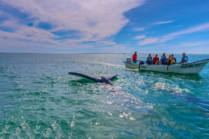 loreto ballena azul