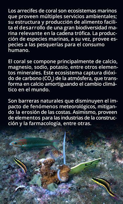 Restauran arrecifes de coral en Baja California Sur