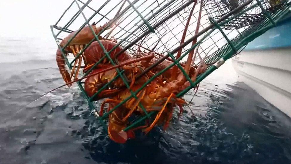 pesca de langosta en Baja California sur