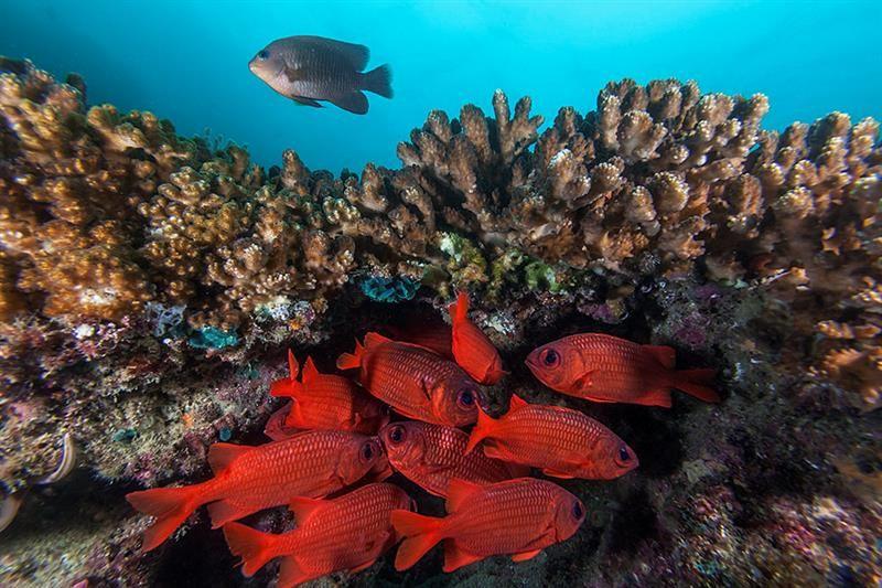 el acuario del mundo, baja california sur