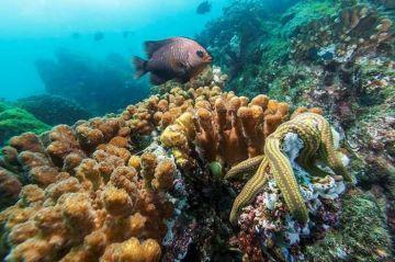 ONG's protegen arrecifes del Pacífico para frenar su degradación