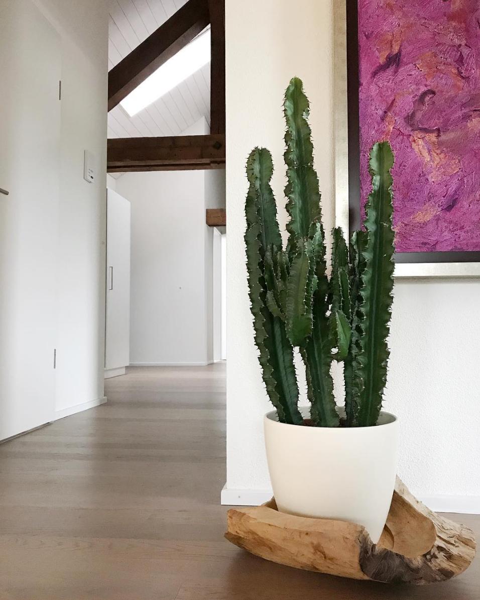 diseño de interiores cactus