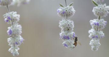 """""""Hoteles"""" para proteger a las abejas silvestres en peligro de extinción"""
