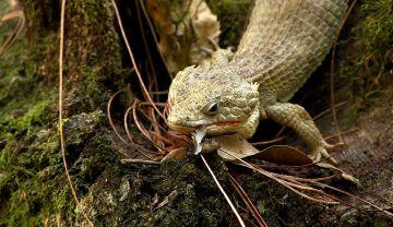 Expertos buscan preservar especies endémicas de Chiapas