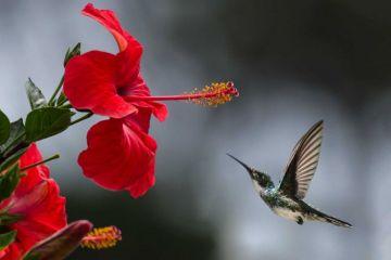 Jardines para colibríes pretenden polinizar a Ciudad de México