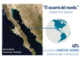 La Península de Baja California es un brazo de tierra que tiene un área de 143,600 km2