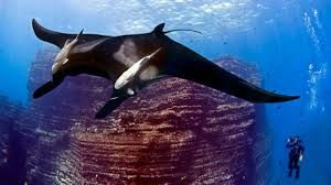 revillagigedo parque nacional especies marinas