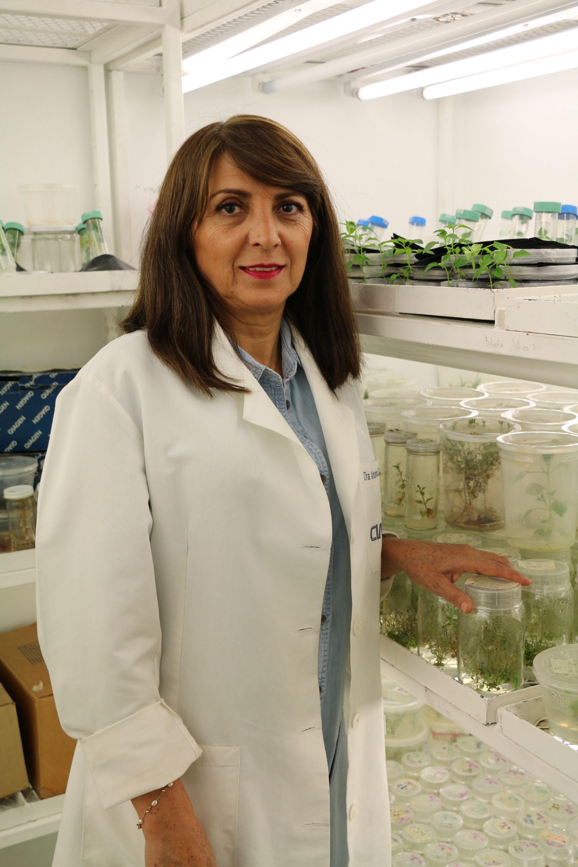 La doctora Antonia Gutiérrez Mora fue quien encabezó el estudio técnico sobre el chile-crédito Cortesía Ciatej