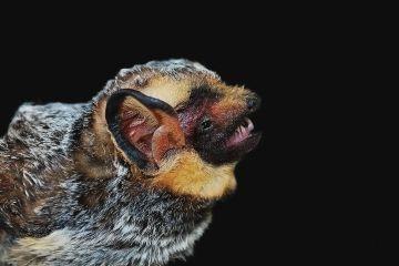 Murciélagos, víctimas inesperadas de los parques eólicos en México