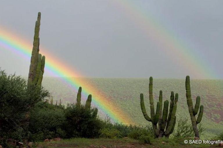 paisaje-matorral-xerofilo-de-la-peni-nsula-de-baja-california-fotografi-a-cortesi-a-de-edgar-sanchez