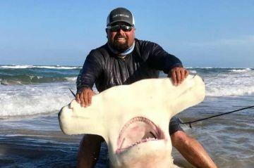 Tiburón martillo de más de 4 m es el 'trofeo' de un texano que consiguió su