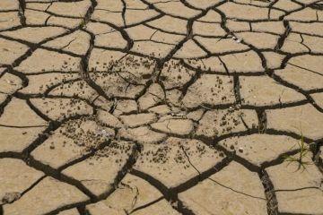 Cambio climático provoca sequía sin precedentes en la Selva Lacandona en