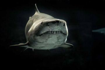 El biólogo mexicano que dedica su vida a arrojar luz sobre el tiburón blanco