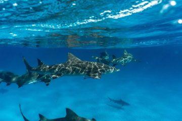 Tiburón muerde a niña de 9 años que estaba de vacaciones con su familia
