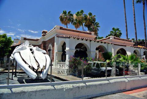 muse de la ballena La Paz